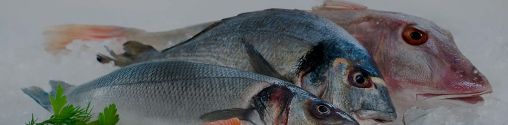 Detroit Seafood Supplier   Seafood Suppliers in Trade Fairs