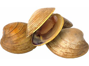 Clam Surf
